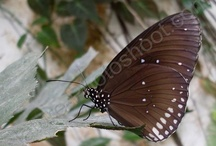 Photography ~ Butterflies / Butterfly photography