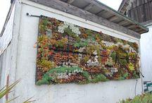 garden and yard / by Lisa Durham