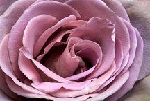 Floral, Gardening, Horticulture, Just an Asst. Cltn of Indoor, Outdoor, living, growing, beauty