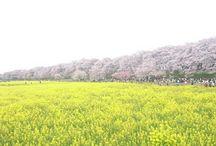 入賞作品『全国ボタニカルスポットフォトコンテスト-2016春』 / http://greensnap.jp/contest/42