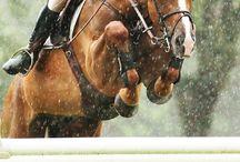 HORSES ~ SHOW RING & JUMPING
