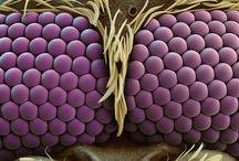 Mikroskopische Ansichten