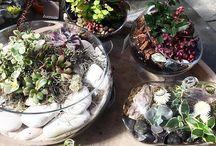 Мини сад, мини-садик, миниатюрный сад, Miniature gardens, Dish gardens