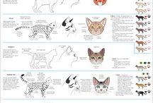 Eläinten piirtäminen