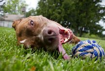 Pet Adoption / Find pet adoptions and animal rescue in your area.