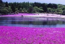 Japanese   -Mt. Fuji-