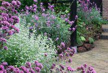 Növények/kertek