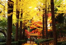 Japan / I heart Nippon