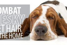 Pets Are Like Family / This board is about topics of keeping your home clean if you have pets.