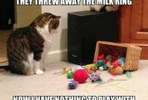 All things cat / All things that have to do with cats.