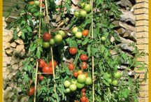 Obst & Gemüse auf dem Balkom