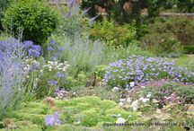 Mottisfont Hampshire UK / Mottisfont is known for its roses, however the herbaceous planting can be inspirational