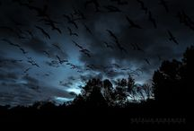 Spooky stuff / Things I like that are kind of weird, halloween like, pagan, spiritual, atmospheric or just my kinda stuff