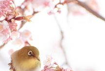 So beautiful birds