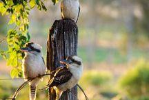 Aussie Critters