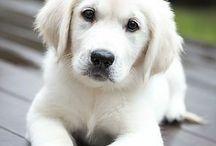 Cuki kutyák