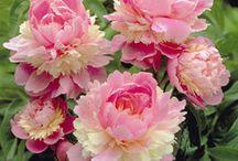 Wonderful Flowers / by Cheryl N