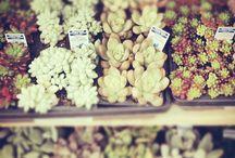 sukulenty&kaktusy