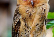 Owls / by Valentin Brekher