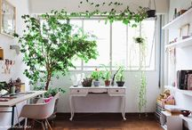 """""""Green"""" Interiors / Incorporating plants in the living space"""