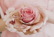 Rosas minhas
