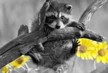 black and white with color splash / by Mara Romania