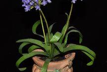 Le mie miniature: piante e fiori di carta / Fiori  in miniatura realizzati con carta e filo di ferro rivestito.