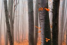 Autumn walks in beauty / by Alicia Livingwaters