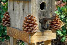 Oiseaux (maison, mangeoires)