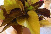 Bouquet de feuilles / Bouquets de feuilles pour déco table