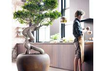 Bonsai, Plants and Gardening Ideas