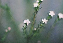 nature. / by Krista Jones