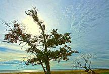 my landscape / No description, I just like it, give me ur description about my photo