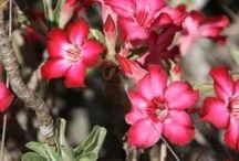Flora and Fauna of Sosian / Flora and Fauna at Sosian, Laikipia, Kenya