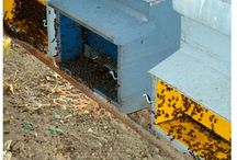 Preparazione delle tavolette al timolo anti varroa / Tecnica per la preparazione di tavolette al timolo per la lotta biologica alla varroa