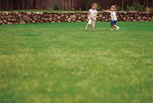 Lawns / Some tips and tricks to get a #lush #green #lawn.