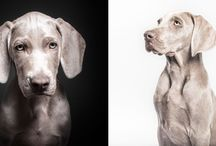 Animals fotos