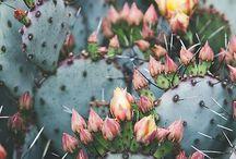 Inspirations : Cactus, plantes grasses