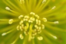 Chartreuse ... / by Bonnie Lowman