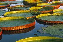 Brasil pantanal