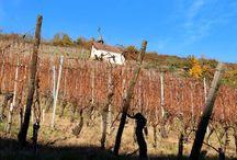 Escapade à Thann (Alsace), autour du Vignoble du Rangen /   Thann est la ville principale de la Vallée de la Thur mais c'est également la plus grande commune du Sud de la Route des Vins d'Alsace.