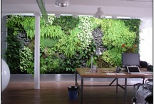 Wall Gardens / Vertical gardens and walls of plants