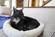 Friday Cat Blogging / Starring Inkblot and Domino / by Mother Jones