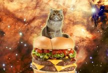 Cats from space....I like