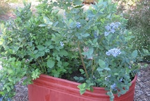 gardening / the what, when, how and try of a green thumb newbie! / by Laurie Ducharme