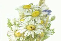 Полевые цветы в акварелях М.Бастин / Творчество Марджолен Бастин
