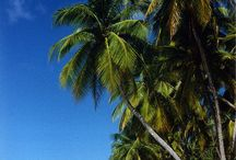 Trinidad and Tobago Beaches / The beaches of Trinidad and Tobago.