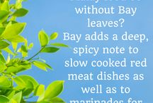 Bay Leaf / A Mediterranean herb that is inextricably linked to our diverse and colourful culinary tradition.