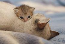 Gatos ♡♥