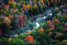 Foliage in Porcupine Mountais (USA)
